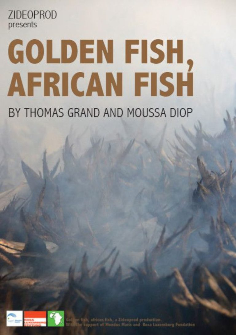 GOLDEN FISH, AFRICAN FISH